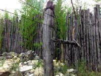 Bamboo vs fence