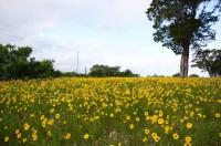 Wimberley June 2, 2012